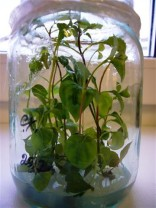 размножение в лабораторных условиях (2) (Small)