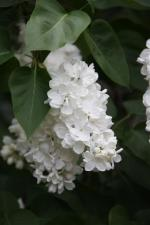 флора (3) (Small)