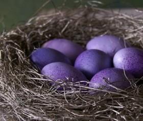 гнездоу