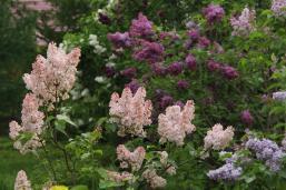 my garden (1)