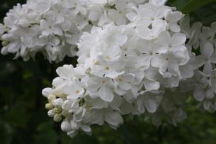 флора (1)