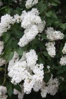 флора (2)