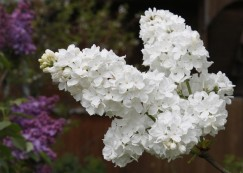 Flora (10) (Medium)