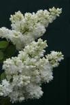 alice-harding-1-medium