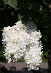 alice-harding-21-medium